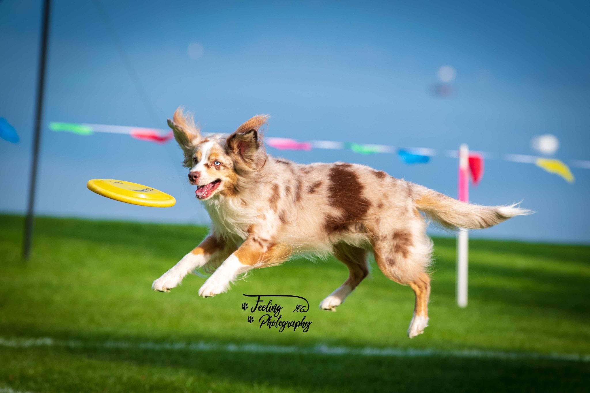 Dogfrisbee-Milow