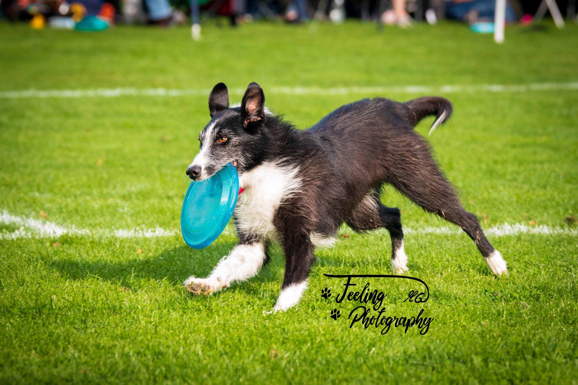 Dogfrisbee-Joey