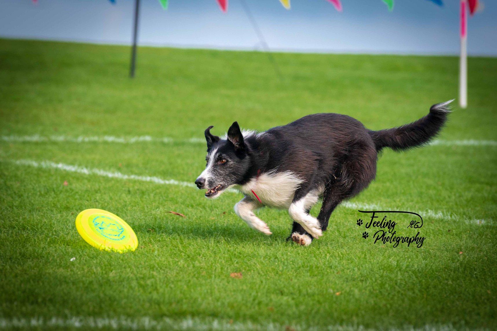Hundefrisbee-Joey