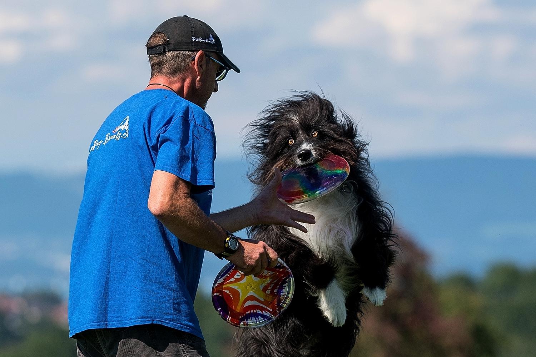 Hundefrisbee Sandro mit Sammy Lee